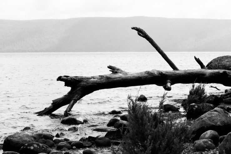Fallen. Lake St Clair